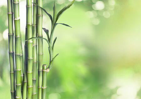 Wiele łodyg bambusa na naturalnym tle, roślina ozdobna.