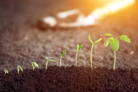Sapling growing from the ground          - Image Stockfoto