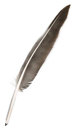 Pluma de pluma