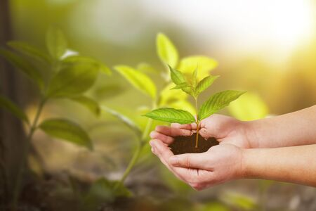 hand holding small tree for planting. concept green world earth day          - Image Imagens