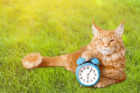 Adorable red cat with clock isolated on white background