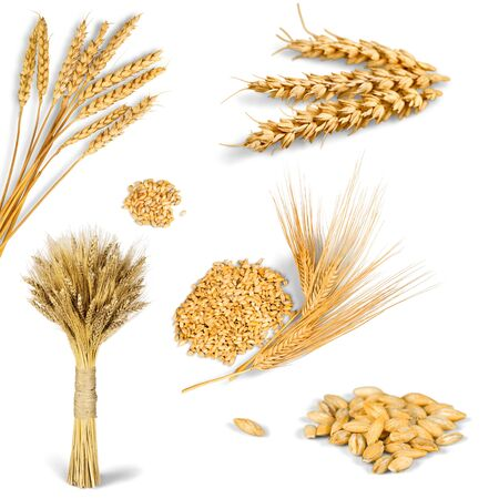 Wheat ears isolated on white background Banco de Imagens