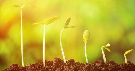 Nouveau concept de vie végétale Banque d'images
