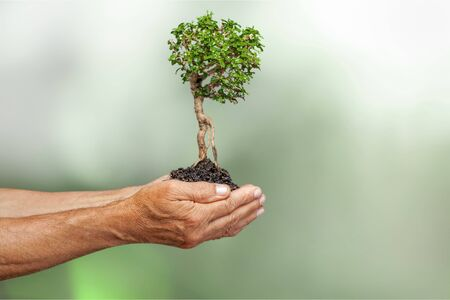 Human hands holding perfect growing tree plant on soil