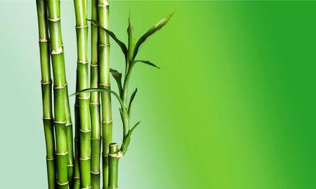 Viele Bambusstiele auf Hintergrund Standard-Bild
