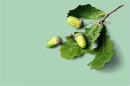 Fresh green acorns isolated on white background. Stock fotó