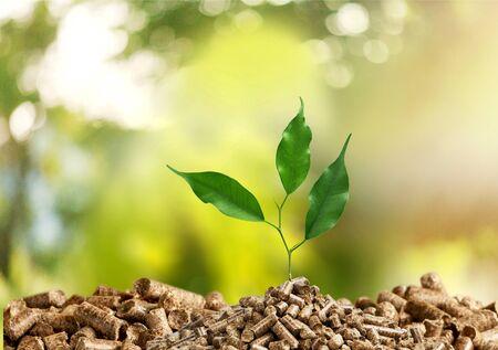 Árbol de la planta en crecimiento sobre fondo verde