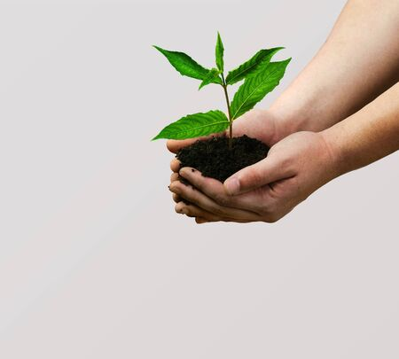 Green Growing Plant in Human Hands Stock Photo