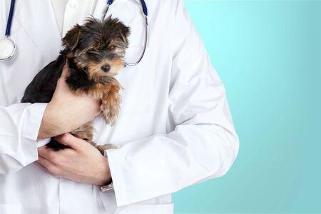 Pequeño perro lindo examinado en el veterinario