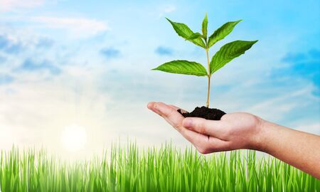 Planting big tree on female human hands with empty copy space on natural green leaves bokeh background and light flare: Saving tree and environment, land, ecosystem preservation creative concept/ idea