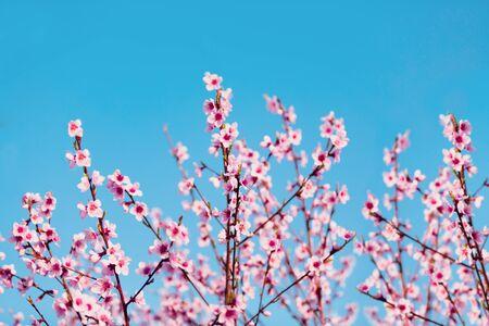 Spring blossom flowers, close-up view