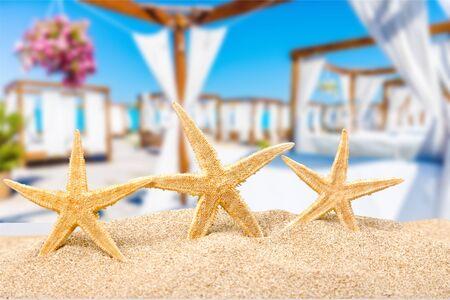starfish  with ocean , beach and seascape, shallow dof Фото со стока