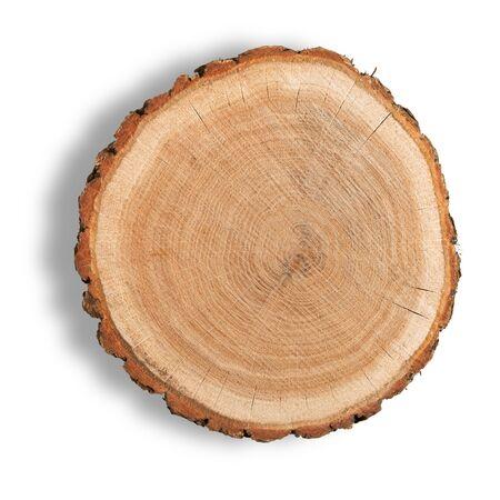 Log Cross Section Фото со стока