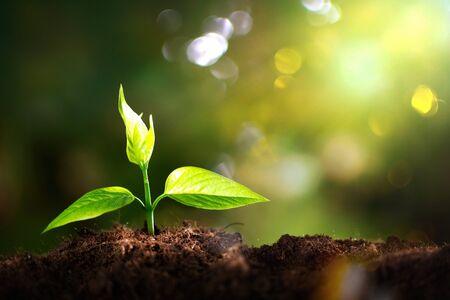Wachstum neuen Lebens im Hintergrund Standard-Bild
