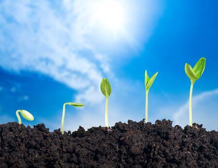 Crescita di nuova vita sul verde sfocato