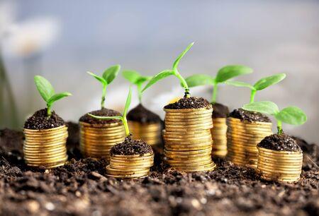 Monedas en el suelo con plantas jóvenes en el fondo