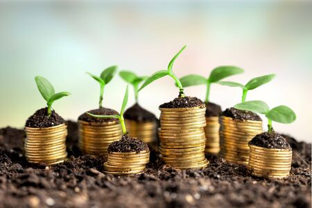Coins in soil with young plants on background