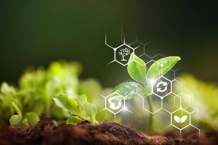 iot, internet of things, agriculture concept, Smart Robotic (artificial intelligence/ ai) use for management , control , monitoring, and detect with the sensor in the farm, field. Banco de Imagens