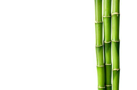 Molti steli di bambù su sfondo bianco