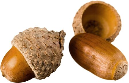 Brown Acorns and One Released from the Cap - Isolated