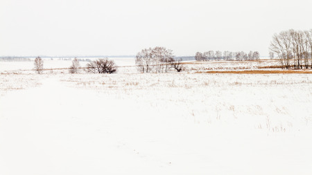 tree line: spaces and fences Stock Photo