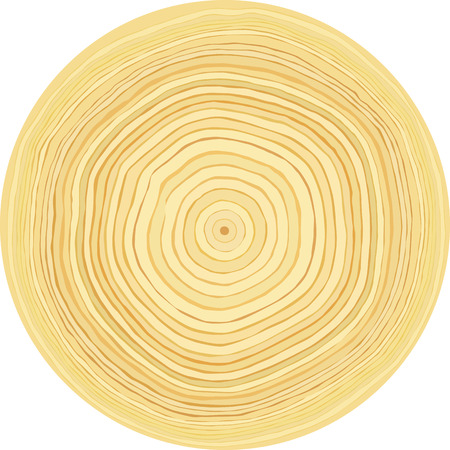 rings on a tree: Accurate smooth raw wood log cut slice texture. Isolated on white background
