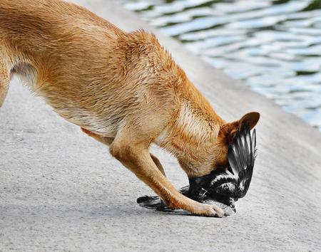 動物の狩猟犬攻撃鳩の餌食