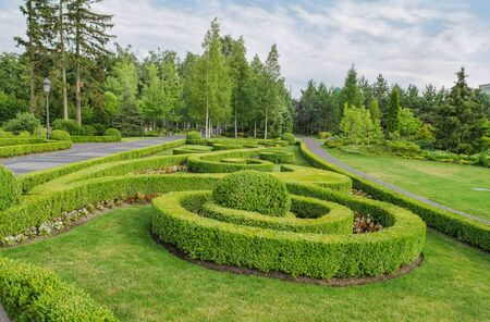 shrub: Park, Square. Landscape design. Beautiful ornamental plants and trees.
