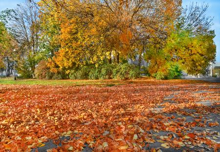 indian summer: Autumn cityscape. Yellow trees, fallen golden leaves. Indian summer