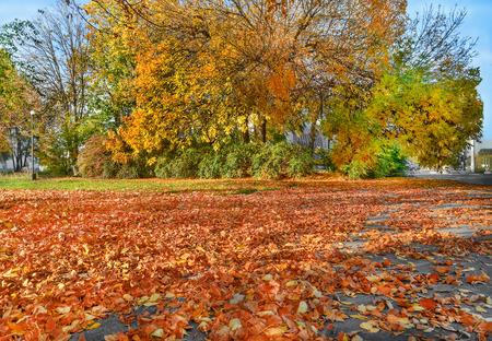 Autumn cityscape. Yellow trees, fallen golden leaves. Indian summer