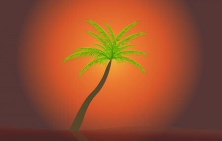 Palm in the sunset  Vector illustration  EPS 10 Vector