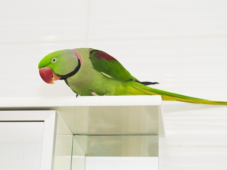A large green parrot Stock Photo - 17707657