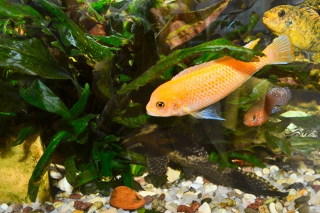 Colorful aquarium with fish Stock Photo - 17707697