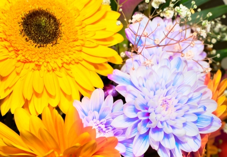Colorful flowers bouquet Stock Photo - 17707729