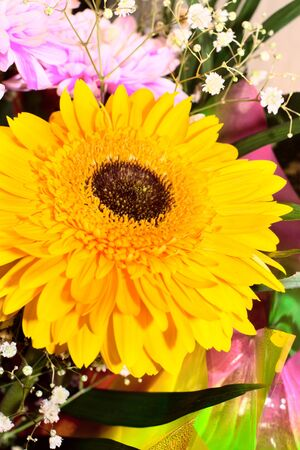 Colorful flowers bouquet Stock Photo - 17707732
