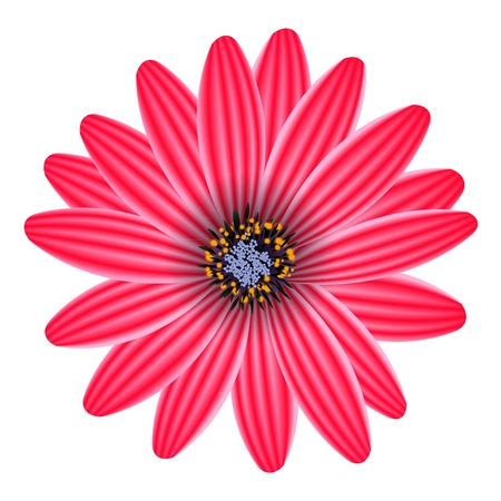 purple flower isolated on white vector illustration Vector