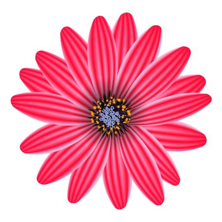 purple flower isolated on white vector illustration Illustration