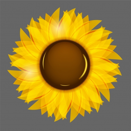 Sunflowers illustration background  Vector
