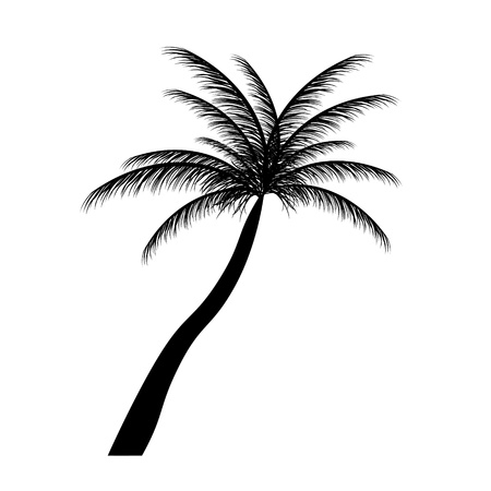 palm tree silhouette: silhouette of palm trees  Vector illustration  Illustration