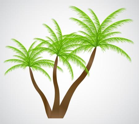 cartoon palm tree: Palm in the sunset  illustration  Illustration