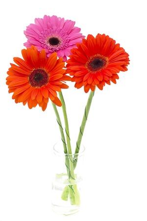 Gerbera flower isolated on white background photo