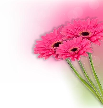 Gerbera flower  background photo