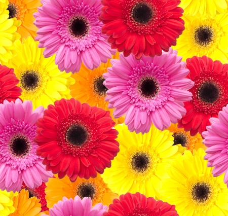 Gerbera flower seamless pattern background Stock Photo