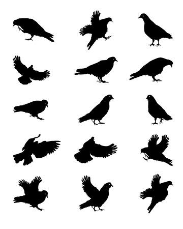 Silhouet van Duiven die op Wit Vector Illustratie Stock Illustratie