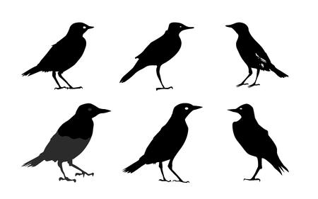 Birds silhouettes Isolated on White Vector Illustration Vector
