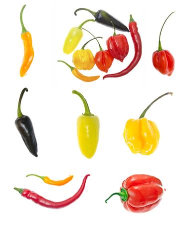 Set of Fresh Colorful Hot Chili Pepper on White photo