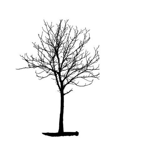 backgorund: Tree Silhouette Isolated on White Backgorund.  Illustration