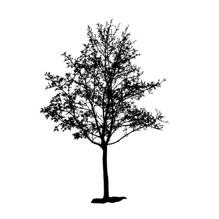 backgorund: Tree Silhouette Isolated on White Backgorund. Vecrtor Illustration Illustration