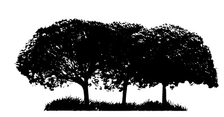 illustrati: Tree Silhouette Isolated on White Backgorund  Vecrtor Illustrati