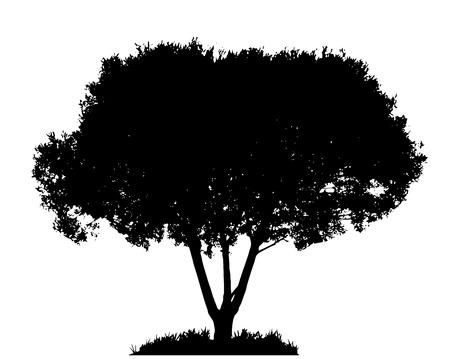 Tree Silhouette Isolated on White Backgorund  Vecrtor Illustrati Vector